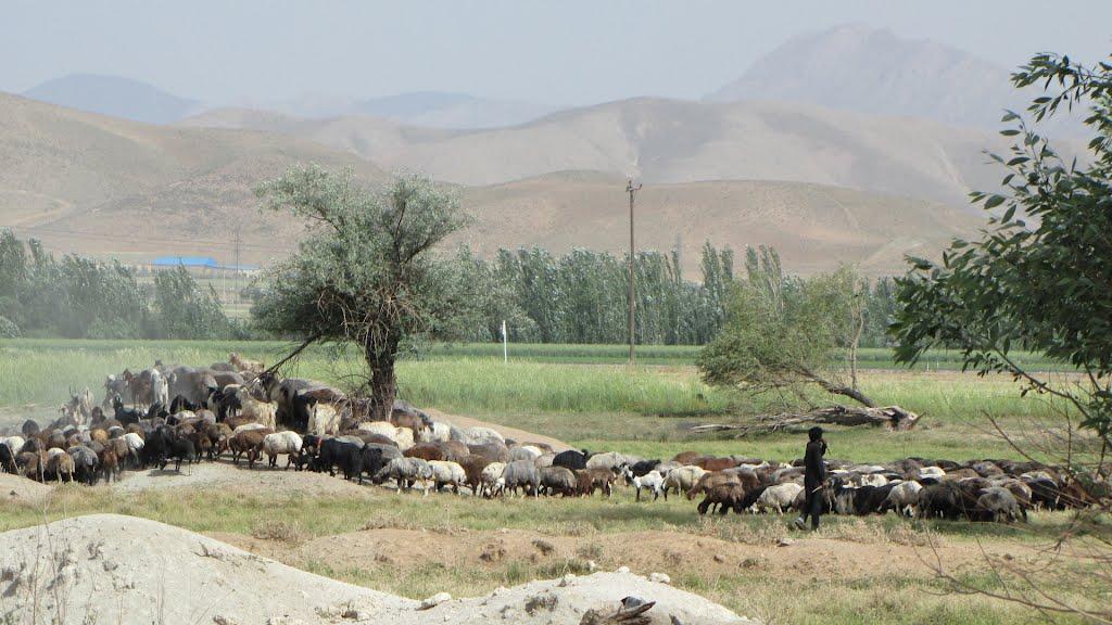 روستای سیرک شهرکرد روستای سیرک شهرکرد
