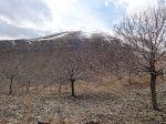 روستای چنار خمین