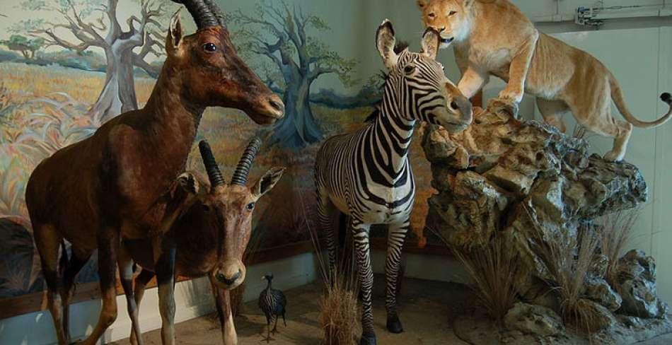موزه تاریخ طبیعی ( محیط زیست ) یزد موزه تاریخ طبیعی ( محیط زیست ) یزد