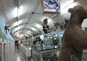موزه تاریخ طبیعی( محیط زیست )یزد موزه تاریخ طبیعی ( محیط زیست ) یزد
