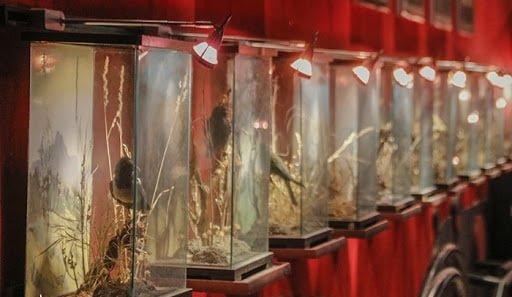موزه حیات وحش سبزوار موزه حیات وحش سبزوار