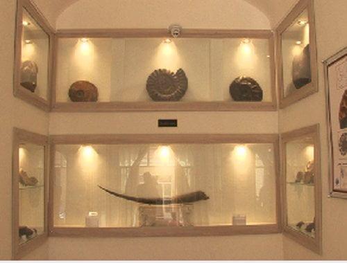 موزه دیرینه شناسی کامبرین