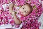 جشنواره گل غلتان در استان سمنان