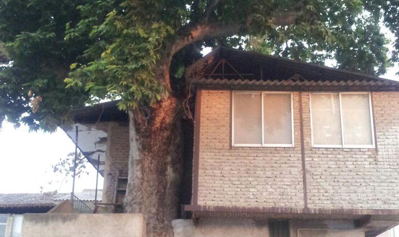 محله سبزه مشهد گرگان محله سبزه مشهد گرگان