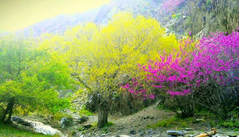 دشت ارغوان مشهد