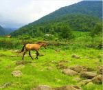 روستای سرجی کلا