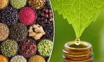 عرقیات گیاهی ایران و خواص آن