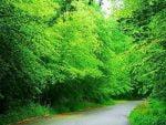 آیا پارکهای ملی در حفاظت از محیط زیست نقش دارند ؟
