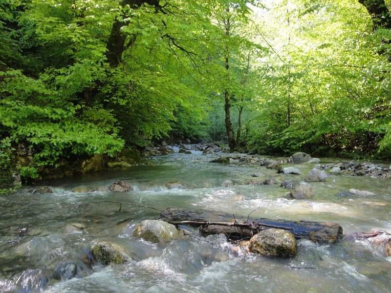 جنگل پاجی دودانگه