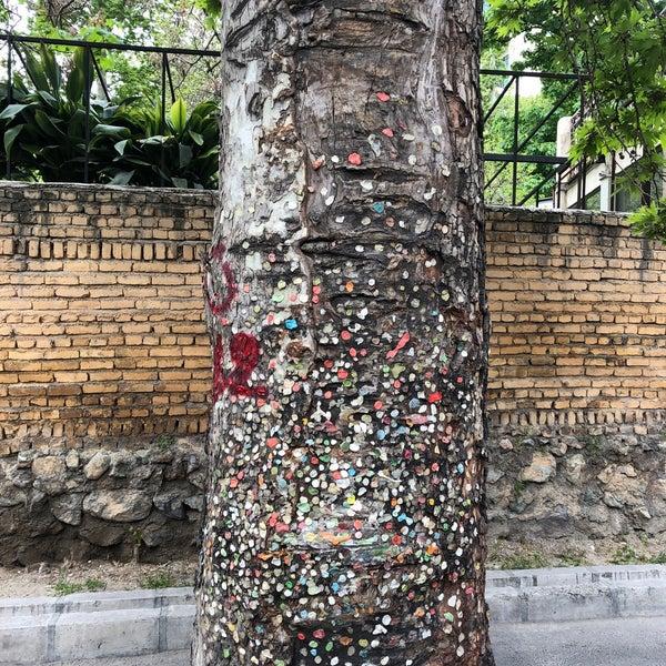 درخت آدامسی تهران
