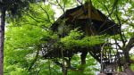 مزرعه توریستی کلبه درختی