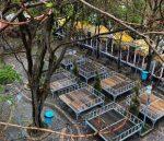 باغ رستوران رسپینا قزوین