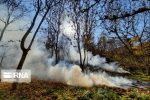 رقص برگها در دام آتش