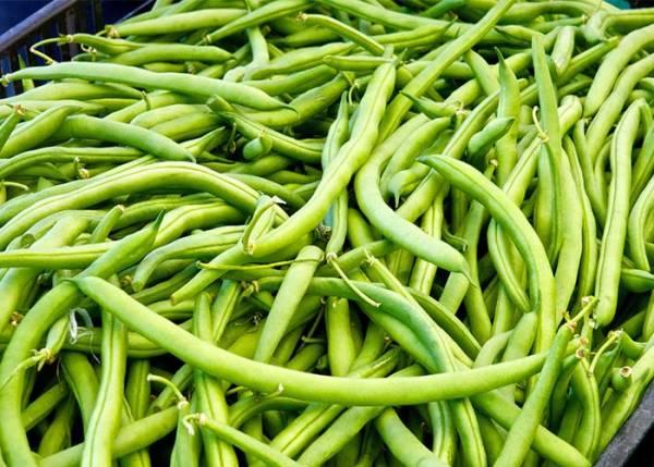 فواید لوبیا سبز