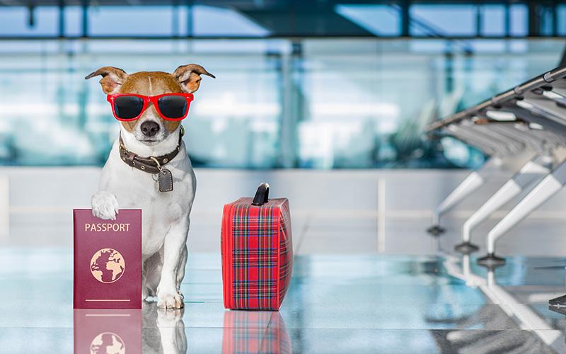 قوانین حمل هوایی حیوانات خانگی