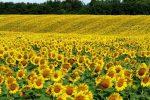بهترین دشت گل های ایران در بهار