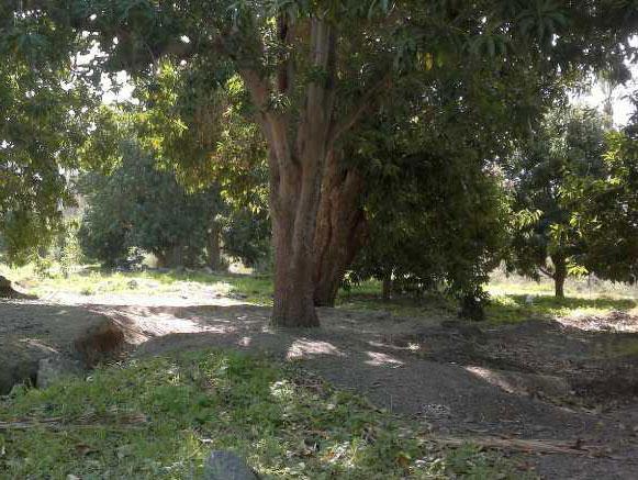 باغ روضه ارم