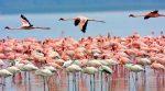 بهترین مکان برای پرنده نگری در ایران کجاست؟