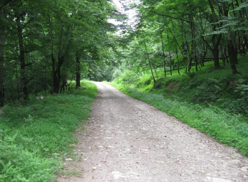 جنگل تیلاکنار