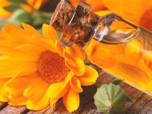 طب سنتی درمان سوختگی با گل همیشه بهار