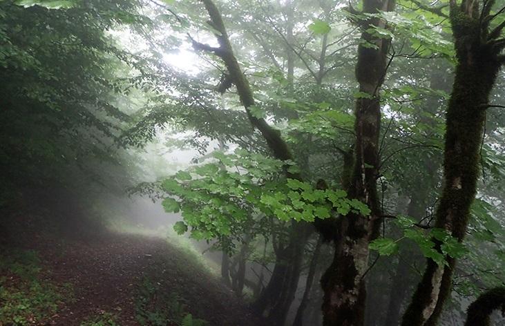 جنگل دیا