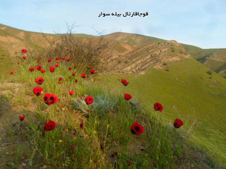 روستای گلی بلاغ بیله سوار