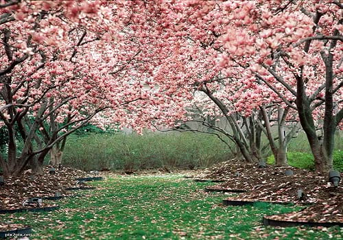 عکاسی در بهار