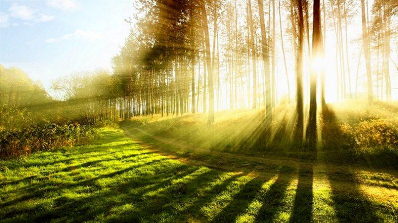 نور پخش شده در طبیعت
