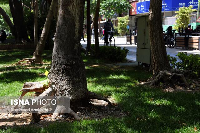درختان چهارباغ