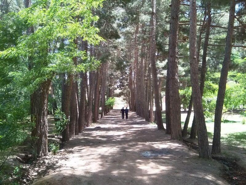 باغ فریمان