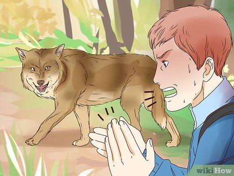 نجات از گرگ