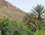 گیشتک مهرستان با نخلستانهای سرسبز