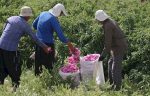 توسعه پایدار روستاهای خراسان رضوی با گردشگری کشاورزی