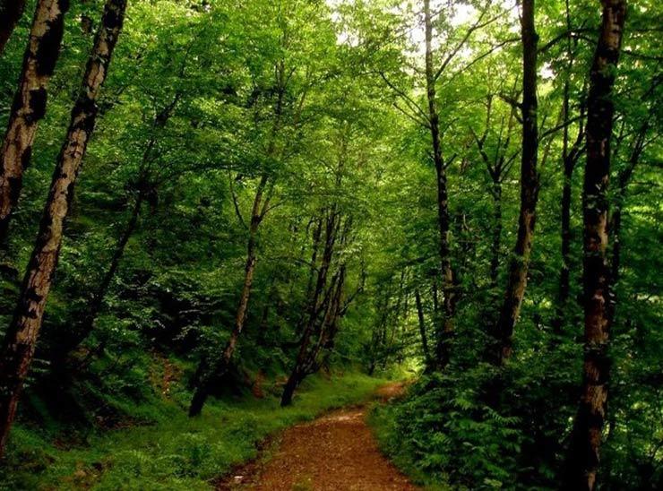 جاده جنگلی روستای صفرابسته