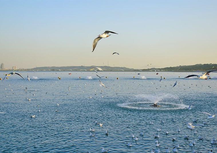 دریاچه خلیج فارس (چیتگر)