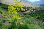 گیاهان دارویی فرصتی برای رونق گردشگری روستایی در کهگیلویه و بویراحمد